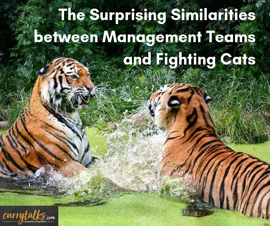 The surprising similarities between Management Teams and fighting cats.